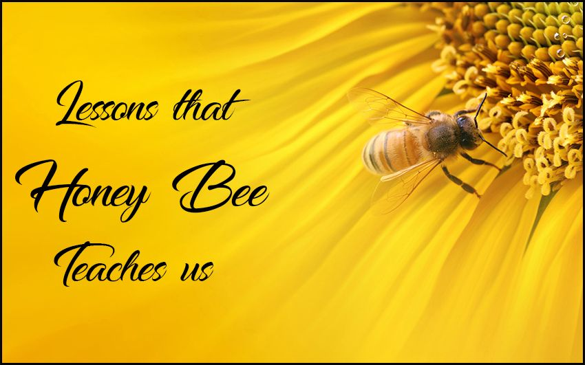 Amazing Lessons that Honey Bee Teaches us for Better Lifestyle
